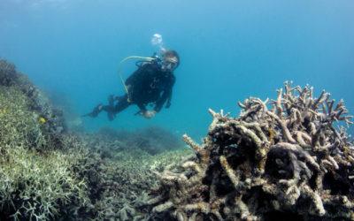 Corals in Peril
